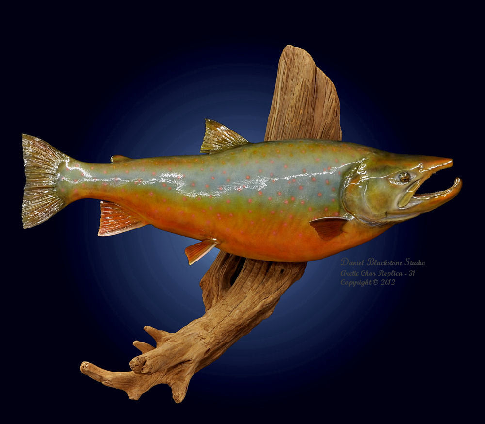 Arctic char fiberglass fish replicas reproductions for Fiberglass fish replicas