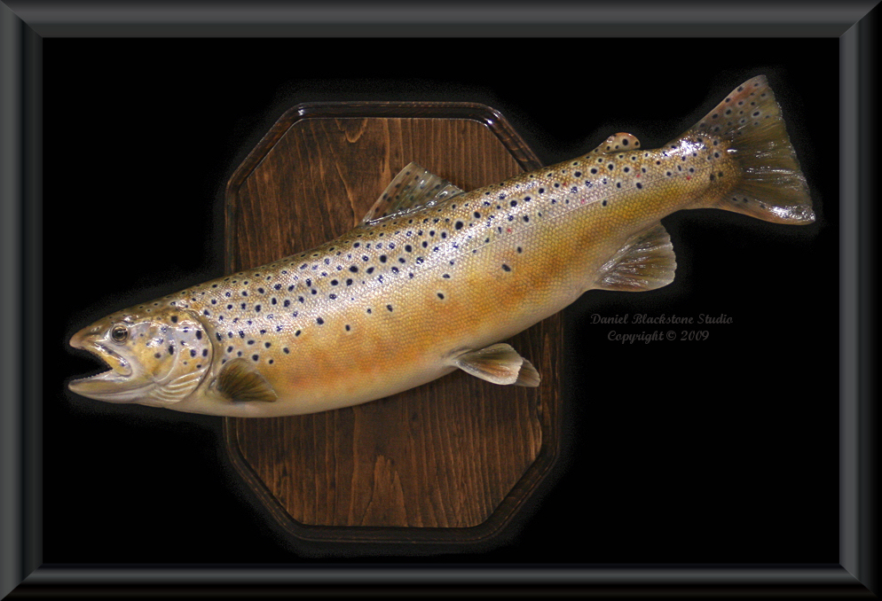 Brown trout fiberglass fish replicas reproductions for Fiberglass fish replicas