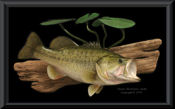 5 lb. Bass Reproduction