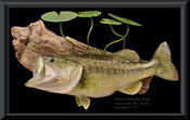 Bass Replica with lilly pads - 11lbs.
