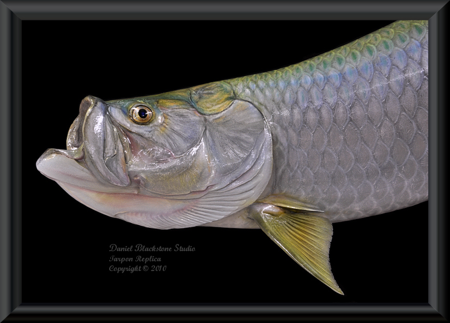 Tarpon fiberglass fish replicas reproductions for Fiberglass fish replicas
